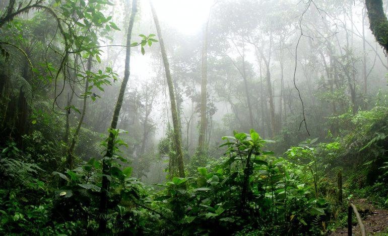 Waarom kiezen voor palmolievrije producten?